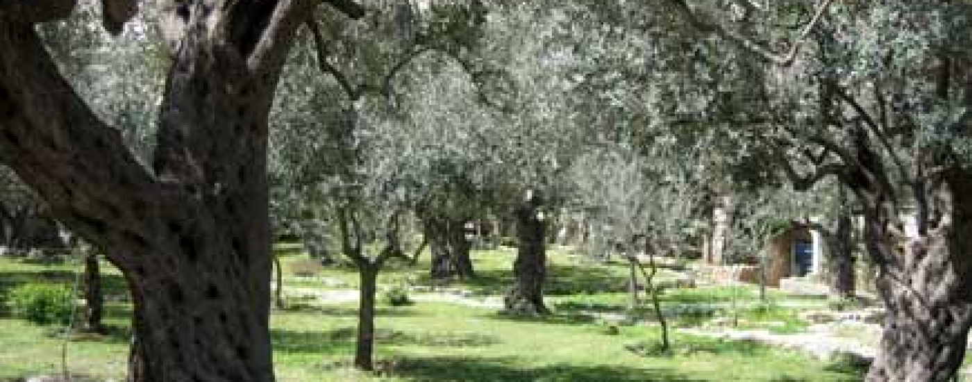 Garden Of Gethsemane Activities In Israel My Flight Zone