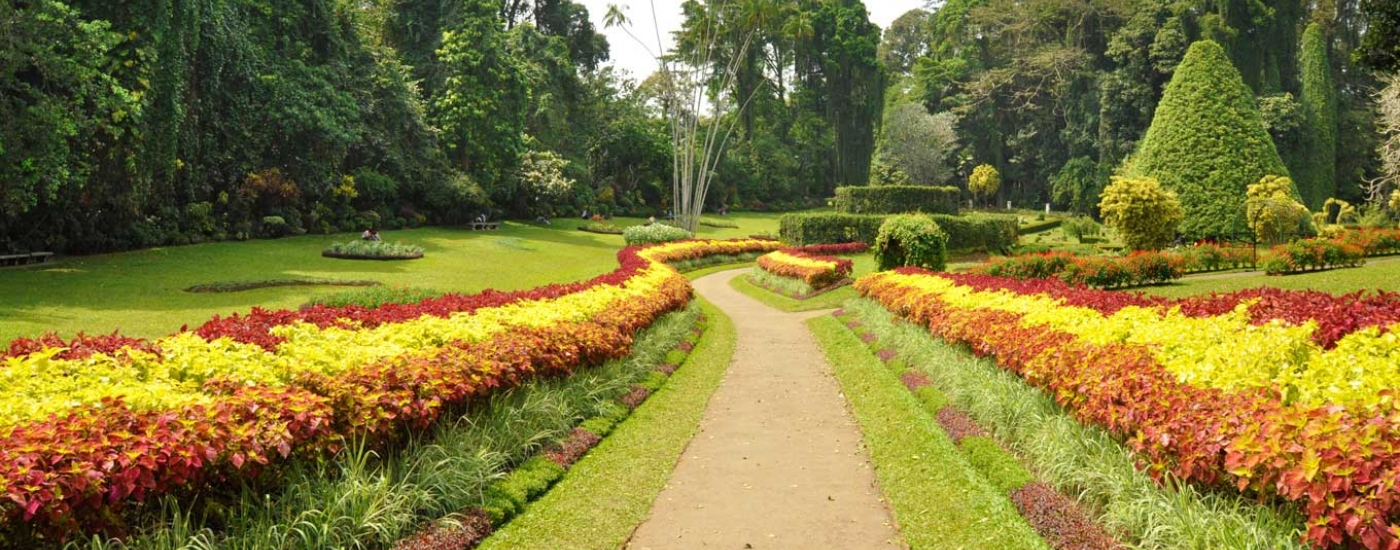 Peradeniya Botanical Garden Was Used As The Pleasure Garden Of The King Of  The Kandyan Kingdom. It Was King Wikramabahu Who Initially Kept Court At ...